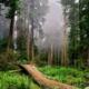 Imágen de un bosque frondoso