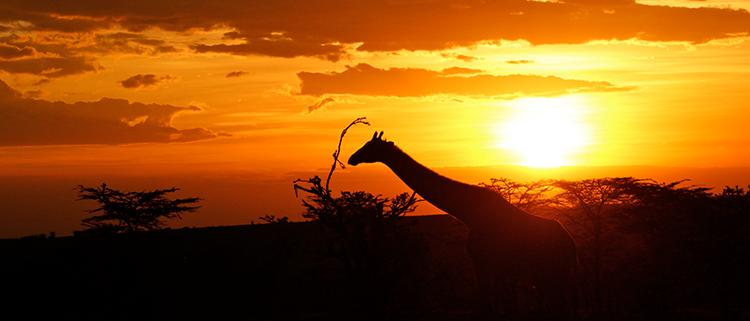 Atardecer en África