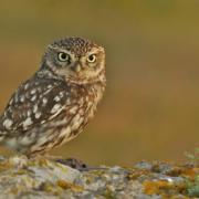 LafargeHolcim censa la avifauna de nueve de sus canteras