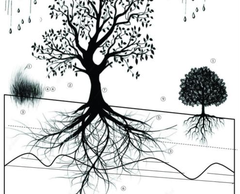 La vegetación en los taludes