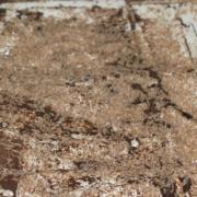 ANECPLA colabora en el protocolo de actuación en cascos urbanos afectados por termitas subterráneas