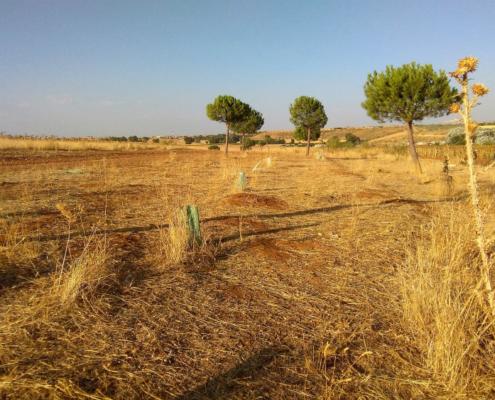 Nueva campaña para concienciar sobre la deforestación y la sequía