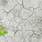 ROCKWOOL comparte su experiencia contra el Cambio Climático en un encuentro de la Fundación Empresa y Clima