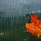 Las humedades aumentan un 40% con la llegada del otoño