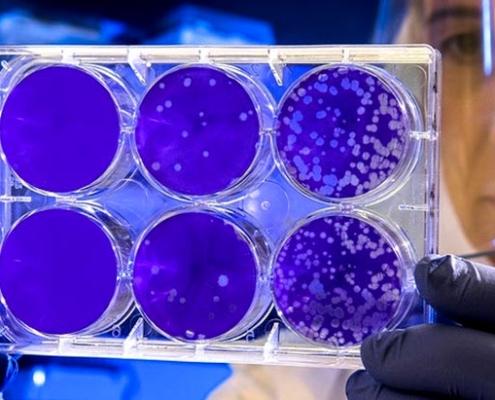 ANFALUM crea nuevo grupo de trabajo sobre luz ultravioleta
