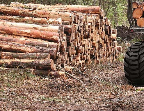 Forestal: un sector sin crisis