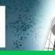 Nuevo sellador para el contacto con agua potable: Sintex PU DW