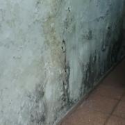 Edificaciones con humedades estructurales tienen riesgo de colapso estructural